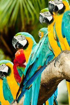 tropicalcolor