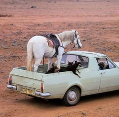 """Who needs a horse float? That is one """"bomb proof"""" horse. Complete trust between horse and man. Love it."""