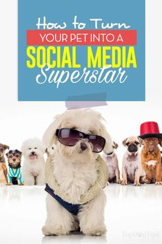 How to Turn Your Pet into a Social Media Superstar Pet Boarding, Famous Dogs, Funny Dog Memes, Guide Dog, Animal Projects, Medium Dogs, New Puppy, Dog Care, Have Time