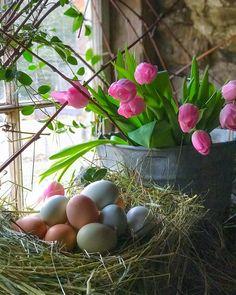 "547 To se mi líbí, 107 komentářů – Viets Brook Farm~Lisa 🍃🌸🍃 (@viets_brook_farm) na Instagramu: ""Beautiful fresh eggs, tulips...So soon we will be into Spring beauty! Sharing with Penny…"""