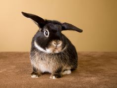 What you need to know about having a pet rabbit.