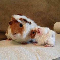Cute momma and baby