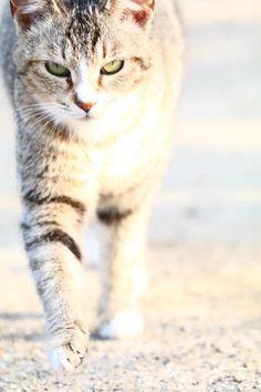 #Cats  #Cat  #Kittens  #Kitten  #Kitty  #Pets  #Pet  #Meow  #Moe  #CuteCats  #CuteCat #CuteKittens #CuteKitten #MeowMoe      野良猫ですけど。(@PAL_saiun)さんより  #CuteCats...   http://www.meowmoe.com/11012/