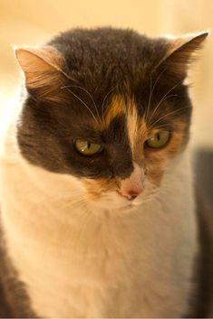 Чем кормить кота, как составить правильный рацион питания для кошки