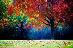 colorful landscape photography  autumn tree  fog by slightclutter, $40.00