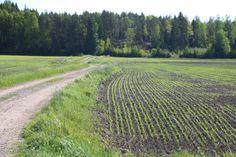 Kevättunnelmia pellolla // Spring in the fields