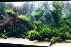 Похожее изображение Lisbon Oceanarium, Trip Advisor, Aquarium, Portugal, Plants, Goldfish Bowl, Fish Tank, Planters, Aquarius