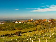 View on vineyard by MacBen #Landscapes #Landscapephotography #Nature #Travel #photography #pictureoftheday #photooftheday #photooftheweek #trending #trendingnow #picoftheday #picoftheweek