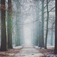 【michelle.ineurope】さんのInstagramをピンしています。 《Silence... . . . #hetlandvanooit #reusachtigveeltezien #abandoned #abondonedthemepark #thenetherlands #holland #landvanooit #silence #forest #winterwonderland #themepark #オランダ #放棄されたテーマパーク #放棄 #放棄されました #テーマパーク #冬 #雪 #森》