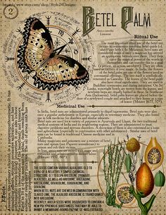 Betel Palm Book of Shadows page, Ritual Poisonous Plants - Book of Shadows - Buch Herbal Magic, Magic Herbs, Magick Spells, Green Witchcraft, Witch Spell, Poisonous Plants, Kitchen Witch, Book Of Shadows, Occult
