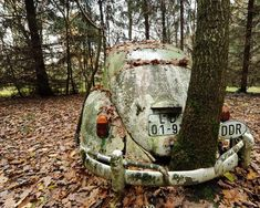 A tree groes in a VW Beetle from the GDR. This beetle was supposedly the first car to cross the German border after the Berlin Wall fell.