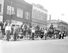 Budweiser Clydesdales. Fayetteville NC