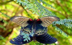Animal Butterfly  Wallpaper