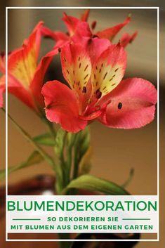 Blumendekoration Frühling: Das i-Tüpfelchen einer individuellen Dekoration sind die Blumen. Lassen Sie sich inspirieren von liebevoll in Szene gesetzten Blumenarrangements unserer Bloggerin Katja! Gras, Plants, Geraniums, Dahlias, Colorful Flowers, Women's Coats, Summer Decorating, Limelight Hydrangea, Floral Arrangements