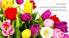 "Buy the royalty-free Stock image ""Colorful bouquet of fresh tulips"" online ✓ All image rights included ✓ High resolution picture for print, web & Social. Pink Tulips, Tulips Flowers, Cut Flowers, Spring Flowers, Beautiful Flower Arrangements, Most Beautiful Flowers, Different Kinds Of Flowers, Top Imagem, Flower Landscape"