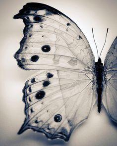 6a8530435e6b Black and White Nature Photography Butterfly Wall by RubyandLuna Jellyfish  Art