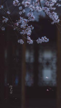 Dandelion, Flowers, Plants, Dandelions, Florals, Planters, Flower, Blossoms, Plant