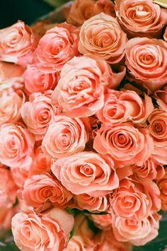 tangerine roses: Gorgeous!