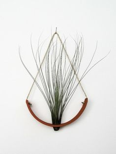 palemauve:    Awesome air plant cradle made by Mike McDowell, find him at http://mudpuppyceramicstudio.tumblr.com/