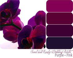 Pink. Purple. Black. Color Palette.