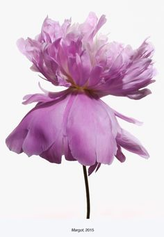 Paul Lange: Big Blooms and Fowl Portraits, Chicago Botanic Garden, until June 28th | Duggal Visual Solutions