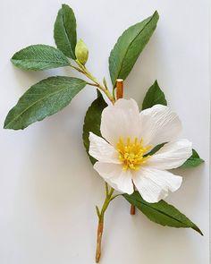 "470 Likes, 17 Comments - Lynn Dolan (@lmdolan75) on Instagram: ""Camellia.  #camellia #sasanqua #crepepaper"""