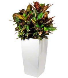 Planten met potten   Chicplants