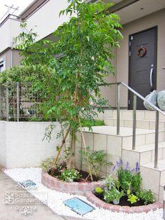 花壇 ピンコロ 植栽 シンボルツリー 常緑樹 シマトネリコ