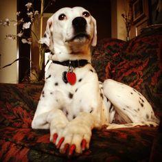 Spotty Dotty, looking oh so pretty.