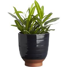 314adf5ab25 cersei planter - CB2 Modern Planters