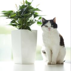 Donice Elho planter with cat. They make a classy looking pair.