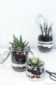 [ DIY ] Détourner des bocaux en terrariums