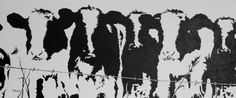 black and white cows - Google Search
