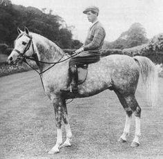 NASEEM (Skowronek x Nasra, by Daoud) 1922-1953 grey stallion exported to Russia 1936.