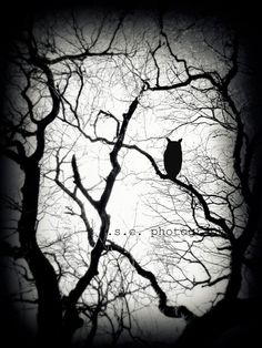 Spooky forest and owl print