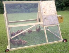 homesteading chicken coops | The Hill at Oso Lago. | Bob's Super Coop Chicken Tractor