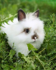 Cute and Cuddly Furry Animals (Photos) | PETA.org