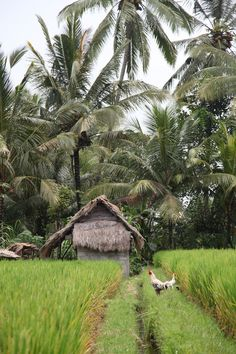 Rural Bali - via Bali Expat Services Paradise Island, Island Life, Village Photography, Water Island, Vietnam, Bali Travel, Ubud, Adventure Is Out There, Countries Of The World