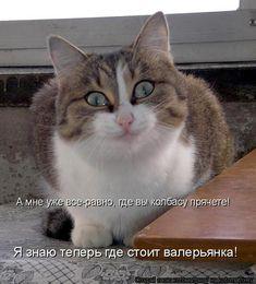 Котоматрица: А мне уже все-равно, где вы колбасу прячете! Я знаю теперь где стоит валерьянка!