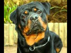 faithful dogs - Google Search