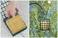 How To Make Homemade Suet Cakes To Attract Birds - One Good Thing by Jillee