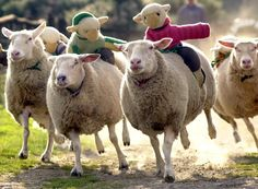 New Article: What's the Strangest Thing a Farmer's Ever Done with a Sheep?  (click the Visit button or the image above to get all the details!)