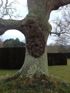Green man tree, Batemans winter 2016