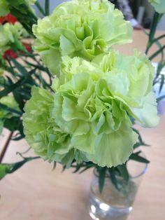 Grønn nellik - Dianthus Celery, Vegetables, Rose, Flowers, Pictures, Pink, Roses, Vegetable Recipes, Royal Icing Flowers