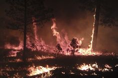 A massive wildfire that has burned more than 265 square miles in the Gila National Forest has become the largest fire in New Mexico history, fire officials confirmed Wednesday.