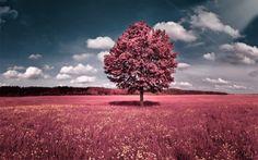 Sky Flowers Pink Grass fields Hills