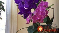 Pred pol rokom bola moja orchidea na vyhodenie: Stačila len 1 zmena a hneď nahodila puky - odvtedy mi kvitne nonstop!