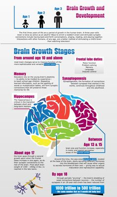 The human brain reaches of its maximum size by age Brain development cont. The human brain reaches of its maximum size by age Brain development continues on throughout early childhood, middle childhood, and adolescence. Middle Childhood, Early Childhood, Whole Brain Child, Brain Facts, Brain Anatomy, Baby Development, Language Development, School Psychology, Neuroscience