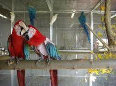 Auch Papageien wurden übernommen! Parrot, Bird, Animals, Parrots, France, Bavaria, Parrot Bird, Animales, Animaux
