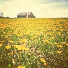 """Rustic Photography - 5x5 inch Photograph """"It Was All a Sunny Daydream"""". $13.00, via Etsy."""